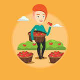 Farmer collecting tomatos vector illustration. Stock Image