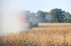 Farmer combining soybeans Royalty Free Stock Photo