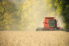Farmer combining soybeans Stock Image