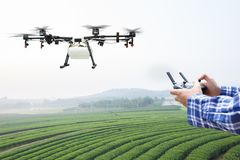 Farmer control agriculture drone fly to sprayed on tea field Royalty Free Stock Photo