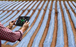 Farmer control tablet technology future tree care and tree royalty free stock images
