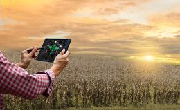 Farmer control tablet technology future tree care and tree planting drought global. Warming the tree withered hot sun royalty free stock image