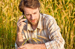 Farmer control wheat field while talking on mobile phone Royalty Free Stock Photo