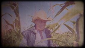 A farmer in a corn field. An elderly man in a straw hat and waistcoat walks through a corn field and checks the harvest. Video archive. Retro camera 8 mm. Old stock video