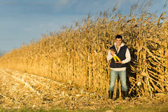 Farmer in corn field Stock Photos