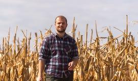 Farmer in corn fields. Young farmer in corn fields royalty free stock image