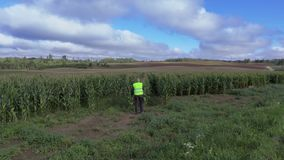 Farmer on the cornfield stock video footage