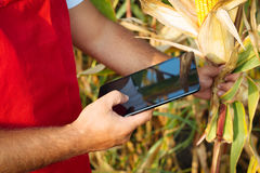 Farmer in cornfield using electronic tablet Stock Photo