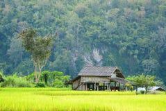 Farmer& x27; cottage di s posizionato in mezzo al campo Fotografia Stock