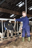 Farmer and cow. Dairy farmer tending to a cow in a modern stable stock photo