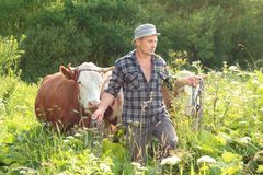 Farmer and cows Royalty Free Stock Images