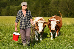 Farmer and cows Royalty Free Stock Image