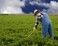 Farmer cultivating. A field by hand Royalty Free Stock Photo