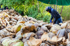 Farmer cutting coconut shell Royalty Free Stock Images