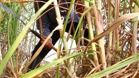 Farmer cutting grass stock video