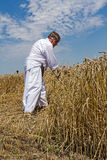 Farmer is cutting wheat. Royalty Free Stock Photos