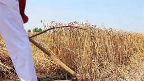 Farmer cutting wheat Royalty Free Stock Photography
