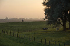 A farmer cycling during sunset. A farmer cycles at the during sunset. Before, he directed the cows to another meadow stock image
