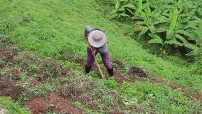 Farmer dig the ground or working at the vegetable garden. Farmer dig the ground or working in the vegetable garden, working agricultural outdoor in green stock footage