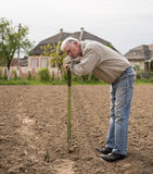 Farmer digging in the garden Stock Images