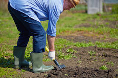 Farmer digging. Image of male farmer digging in the garden Royalty Free Stock Images