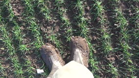 Farmer with dirty boots walking in the field stock footage