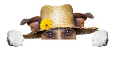 Farmer dog Royalty Free Stock Image