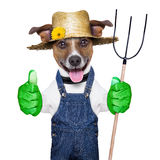 Farmer dog. Happy farmer dog with thumb up holding a pitchfork Royalty Free Stock Photos