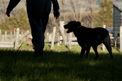 Farmer and dog. Silhouette of a farmer and dog on the farm stock photo