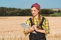 Farmer doing business administration on the field royalty free stock photos