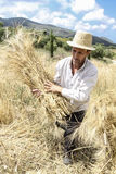 Farmer doing traditional wheat harvest in Greece. Stock Image