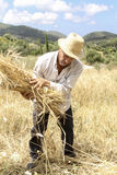 Farmer doing traditional wheat harvest in Greece. Stock Images
