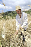 Farmer doing traditional wheat harvest in Greece. Royalty Free Stock Image