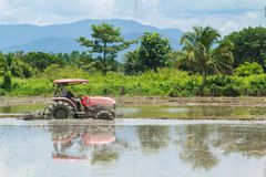 Tractor are Plowing in Rice Field Stock Photo