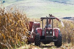 Farmer drives tractor in corn harvesting Royalty Free Stock Image