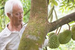 Farmer and durian tree. stock photography