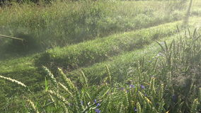 Farmer in early summer morning cut dewy grass from rural road. With lawn mower trimmer stock video