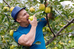 Farmer eating an apple Stock Photos
