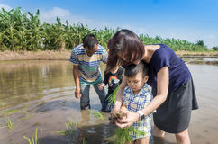 A Farmer is educating kindergarten student to plant rice in paddy field stock image