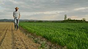 Farmer Examines and Controls Young Wheat Cultivation Field, Crop Protection Concept stock footage
