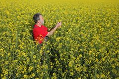 Farmer examining blossoming rapeseed field. Agronomist or farmer examining blossoming canola field, rapeseed plant, early spring Royalty Free Stock Photos