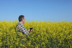 Farmer examining blossoming rapeseed field Stock Photo