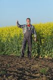 Farmer examining blossoming rapeseed field Stock Image