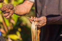 Farmer examining cardamom plant Stock Photo