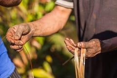 Farmer examining cardamom plant Royalty Free Stock Photos