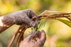 Farmer examining cardamom plant Royalty Free Stock Images