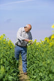Farmer examining rape seed in field Stock Photos