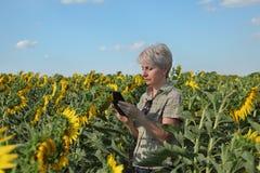 Farmer examining sunflower plant using tablet. Female farmer or agronomist examining sunflower plant in field using tablet Stock Photos