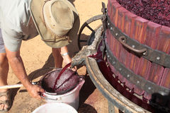 Farmer extracting red grape juice for wine-making Royalty Free Stock Photos