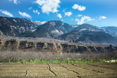 Farmer Farm and Big Mountain scenery. Kashmir ,Indian Stock Image